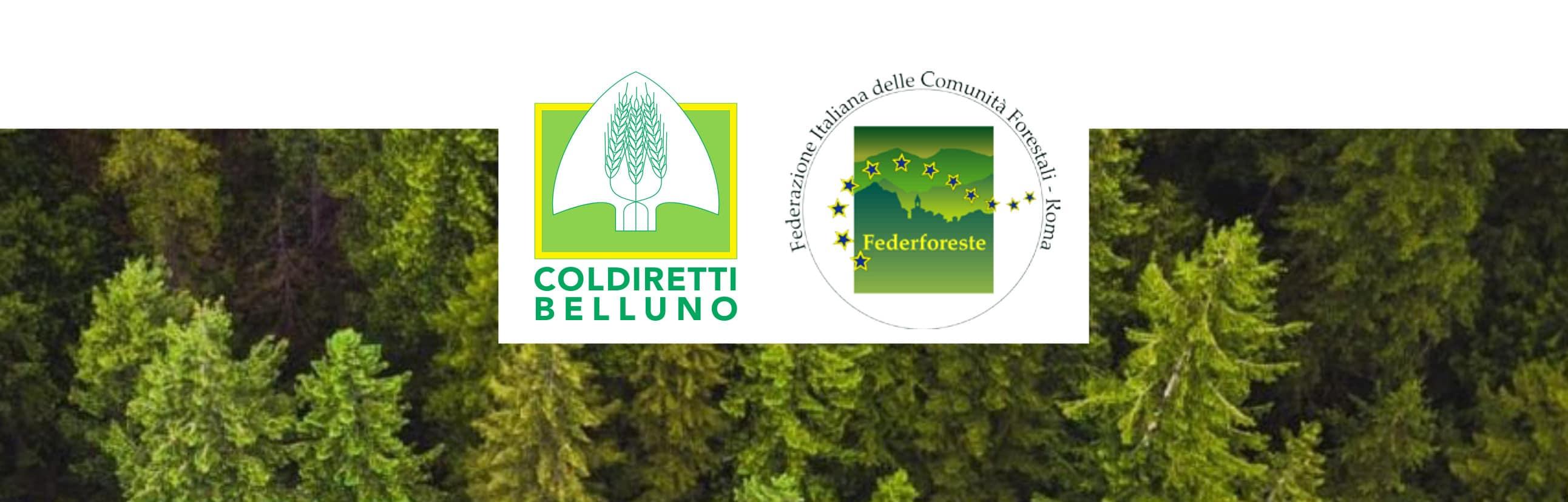 consorzio forestale codiretti-federforeste
