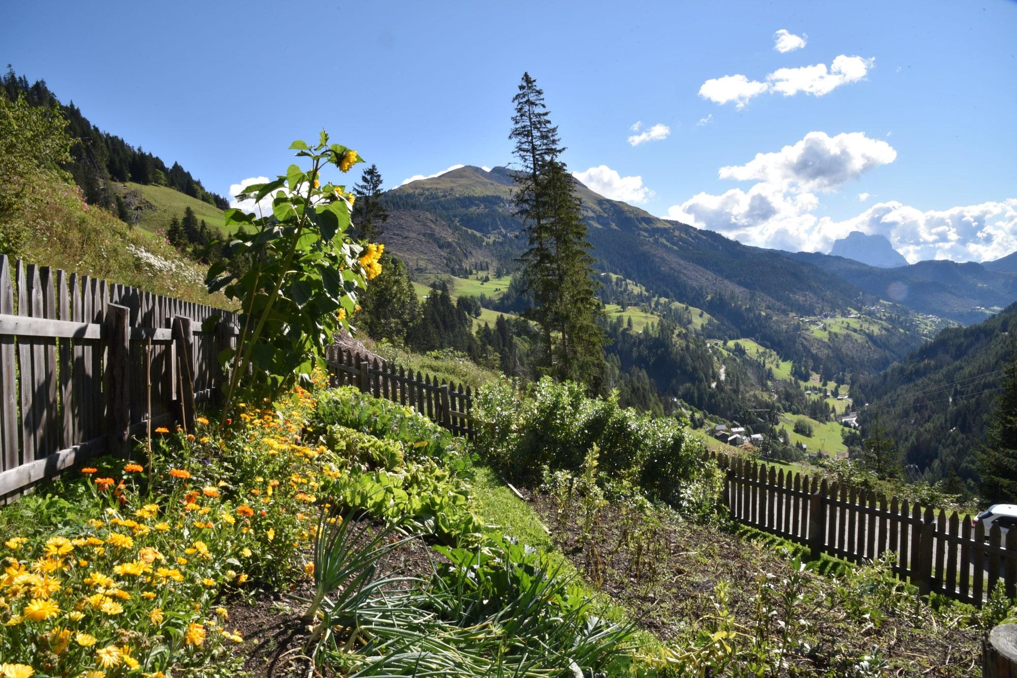Esperienze di recupero e rilancio della biodiversità nelle coltivazioni alpine